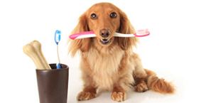 dog teeth cleaning Arizona